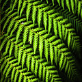 Night Forest Frond by Jorgo Photography - Wall Art Gallery
