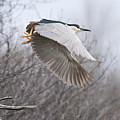 Night Heron In Flight by Michael Cummings