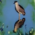 Night Heron by John R Williams