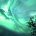 Night Lights by Lori Dobbs