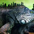 Night Of The Iguana by Doug Sturgess