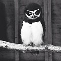 Night Owl by Melissa Stephenson