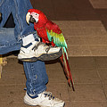 Night-owl Red Macaw Parrot by Les Palenik
