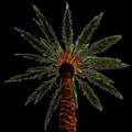 Night Palm by David Lee Thompson