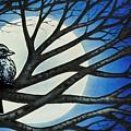 Night Perch by Michael Frank