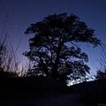 night sky and trees in Molino Canyon Mount Lemmon AZ by David Eisenberg