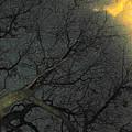 Night Sky by Gerard Yates
