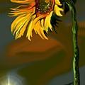 Night Sunflower by Darren Cannell