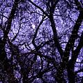 Night Tree by Jez C Self