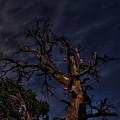 Night Tree by Kris McGehee