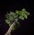 Night Tree by T Brian Jones