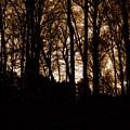 Night Trees by Deborah  Crew-Johnson