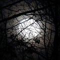 Nightfall by Ursula Coccomo