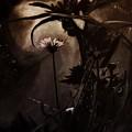 Nightflower by Vanessa Palomino