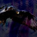 Nighthawk by David Derr