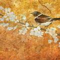 Nightingale's Solstice by Angeles M Pomata