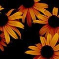 Nighttime Flowers by David Martin Stevens