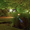 Nighttime Path by Leah Knight