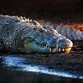 Nile Crocodile On Riverbank-1 by Johan Swanepoel