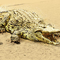 Nile River Crocodile by Humorous Quotes