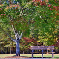 Ninety Six National Historic Site Bench In Autumn  by Lisa Wooten
