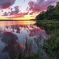 The Nip Sunset by Jomo Drew