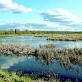 Nisqually Marsh by Linda Carruth