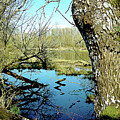 Nisqually Pond by Linda Carruth