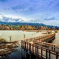 Nisqually Refuge Wetlands Boardwalk  by Barry Jones
