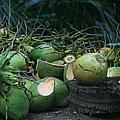 Niu Hawaiian Coconuts Hooululahui Kahekilinui Wailuku by Sharon Mau