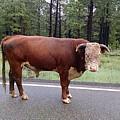 No Bull by Roberta Byram