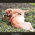 No Fear by John Feiser