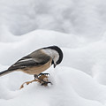 Chickadee Finds A Peanut by Patti Deters