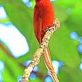 No Name Bird by Edita De Lima