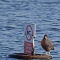 No Swimming by Bob Kemp