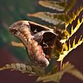 Nocturnal Moth by Douglas Barnett