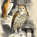 Nocturnal Scene With Three Owls by Wellcome Images