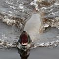 Noisy Sea Lion by Carol Groenen