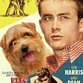 Norfolk Terrier Art Canvas Print - East Of Eden Movie Poster by Sandra Sij