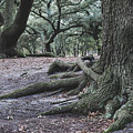 Norfolk Trees by Sarah Jackson