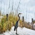 Norriego Point Heron by Mel Steinhauer