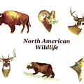 North American Wildlife by Michael Vigliotti