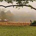 North Carolina Autumn by Paulette B Wright