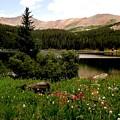 North Fork  Lake Colorado by Carol Milisen