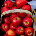North Ga. Apples by Ralph  Perdomo
