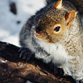 North Pond Squirrel by Kyle Hanson