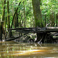 North West Florida Swamp by Winston Hudson