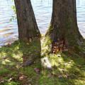 North Woods Lake One by Sara Schroeder