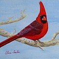 Northern Cardinal 2 by Alicia Fowler