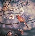 Northern Cardinal Spring by Bob Orsillo